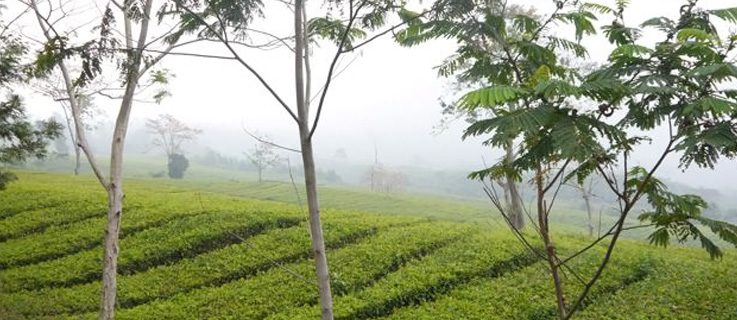 Ulla Lenze | Tea Plantation