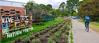 La Gran Ciudad Siembra Goethe Institut Kolumbien