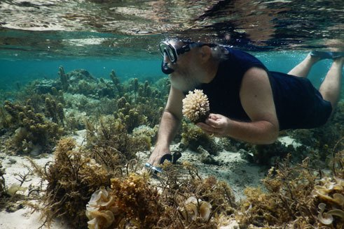 Healthy corals were hard to find on a reef were many had died.