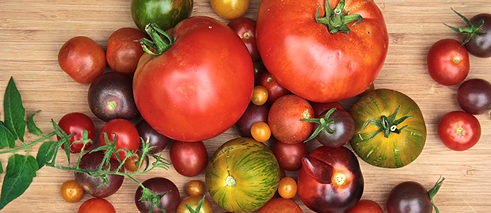 Yes, these shapes and colors are supposed to turn our definition of a tomato on its head! ProSpecieRara cultivates 140 different types of tomatoes.