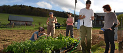 AMI Farm Fellows from the 2012 cohort working on the Allegheny Mountain Farm campus.
