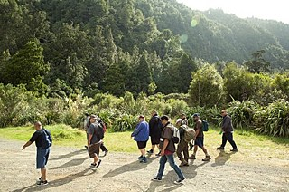 Charles Royal and a group for the food tour walk into the bush near Lake Rotoiti.