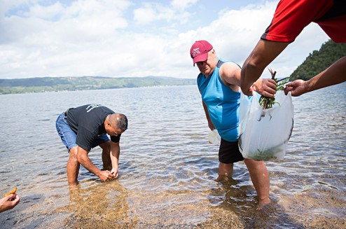 Tour participants washing pikopiko gathered from the bush in the waters of Lake Rotoiti.