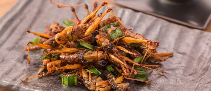 There are good reasons to consider eating insects instead of meat