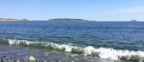 Gull Island, Witless Bay