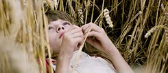 Film still: girl laying in a corn field looking at the sky