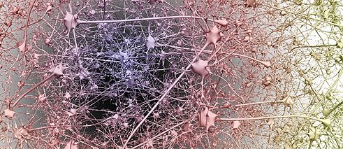 Interconnected neurons
