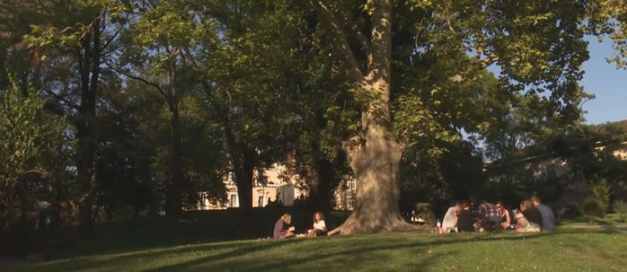 People reading under a tree in a park