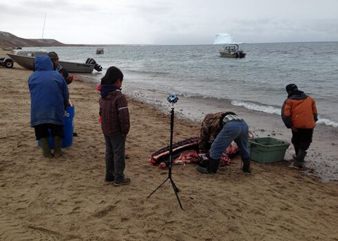 capturing a scene where Inuit are harvesting a freshly caught narwhal on the beach of Pond Inlet, Nunavut, Canada