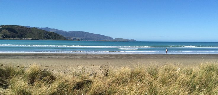 Lyall Bay on a sunny day
