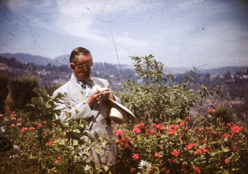 Thomas Mann in Flower Bushes Pacific Palisades ca 1946