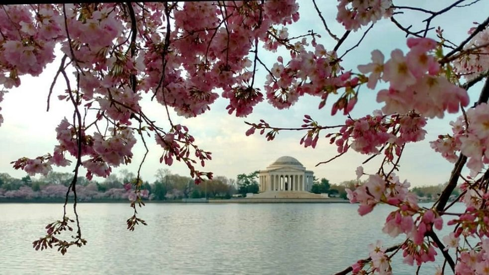Nel percorso verso il Goethe-Institut di Washington la collega passa davanti al Jefferson Memorial.