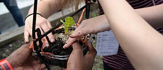 Students planting vegetables in an upcycled container