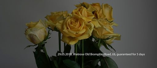 Waitrose Roses in Yellow