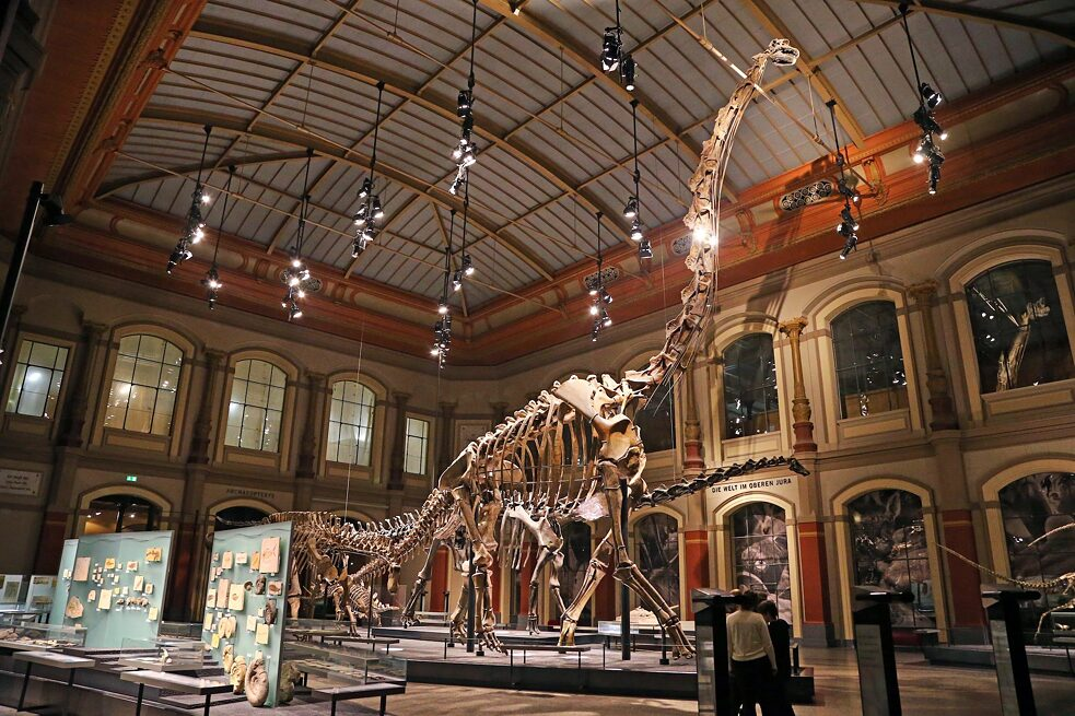 An impressive 13 metres tall, the skeleton of a brachiosaurus from former German East Africa on exhibit in the Museum for Natural History in East Berlin is the largest dinosaur skeleton on display in the world today and a visitor magnet.