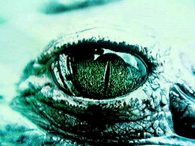 José Alejandro Restrepo, Humboldt's Crocodile is not Hegel's, 1994 (detailed view)