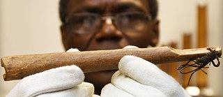 Scientist Ndzodo Awono shows a pipe from Cameroon in the foam magazine of the Überseemuseum Bremen