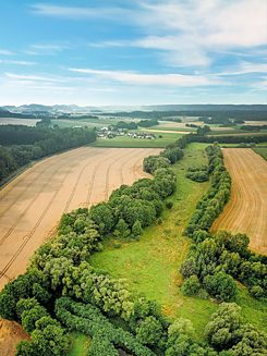 The Green Belt in Thuringia-Bavaria near Mitwitz where the idea for the Green Belt was born.