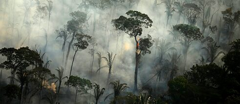 The rainforest is on fire: smoke and flames in the Amazon region near Porto Velho.