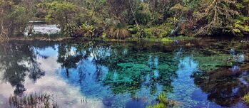 Te Pupu Springs Reflection
