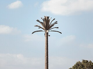 This is not a palm tree, but a radio mast with a mobile phone antenna camouflaged as a palm tree in Cairo. The mobile phone network is also part of the (wireless) Internet.