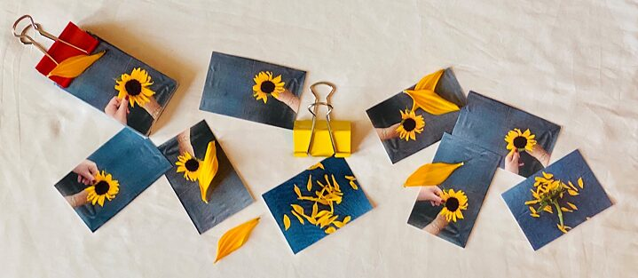 Sunflower flip-book