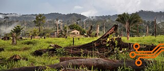 Tree stumps in front of the burning Amazon rainforest