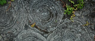 Cambrian Stromatolites from New York State