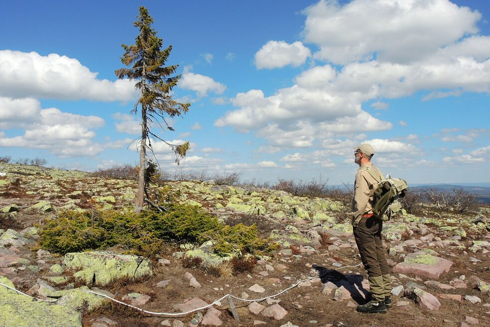 German forester Peter Wohlleben visits Old Tjikko in Sweden